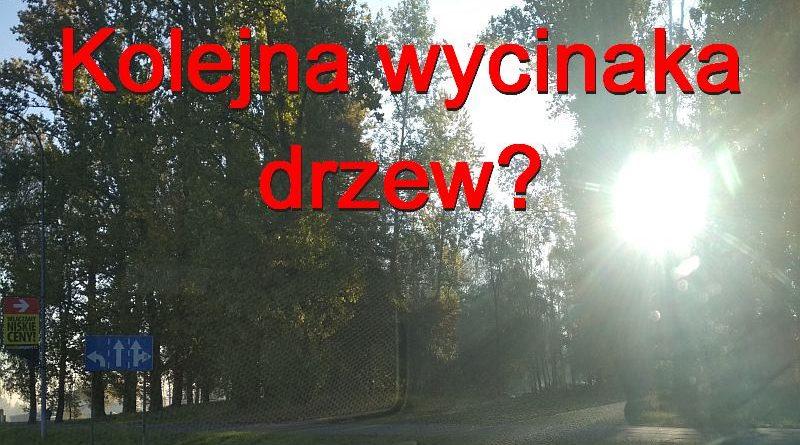 Kolejna afera z wycinką drzew na Bończyku?
